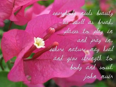 Quotes About Strength And Beauty ... nature may ...