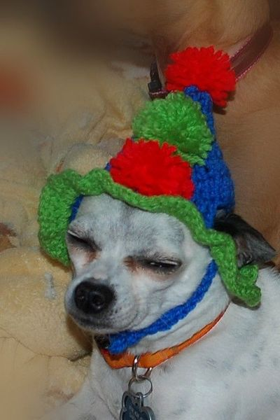 Crochet Pattern Dog Hat Free : Birthday Dog Hat - free crochet pattern / crochet ideas ...