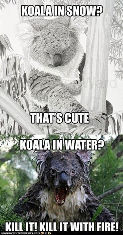 Koala burn! OMG this is hysterically scary!