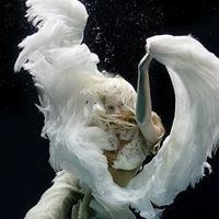 Discovery and exploration. A collection of inspirational underwater photos.