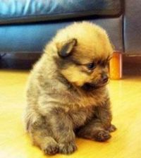 Pup - This baby is entirely too cute! Fluff 'n Stuff!!!