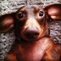 ! #doxie