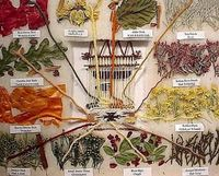 Navajo rugs are made with natural dyed yarns. This dye chart shows 12 of the plants that are used for dye and which colors can be made from the plants. This chart shows (starting in upper left corner and then moving clockwise): Red Onion Skin, Sun...