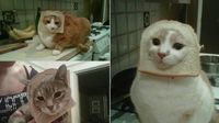 "Forget planking. All the cool kids are putting their cats in bread and taking pictures of them looking like little yeasty lions. ""Breading"" is a throw-back to the old Japanese ""putting-food-on-rabbits"" meme of the early viral web, but with..."