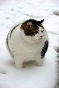 I have a soft spot for fat cats