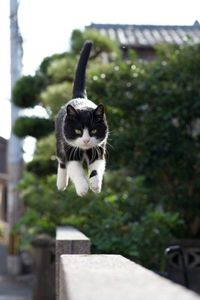 Black & Withe Cat in Colorful Jump