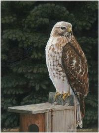 Red Tail Hawk oil painting by Oz