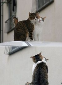 French love cats