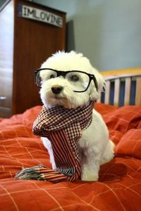 smart doggy