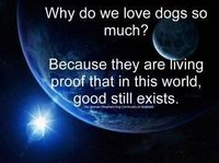Why do we love dogs so much?
