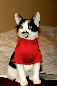 This Is A Cat With A Mustache