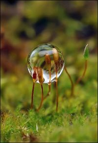 Tiny Worlds - Sprouts in Dew Drop -