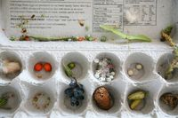 Pre-K Lesson nature lesson plans